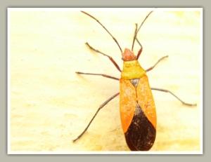 A small bug, seems BiG